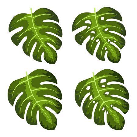 Monstera deliciosa plant leaf vector illustration Reklamní fotografie - 133771723