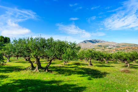 a green valley with olive trees at Sicily