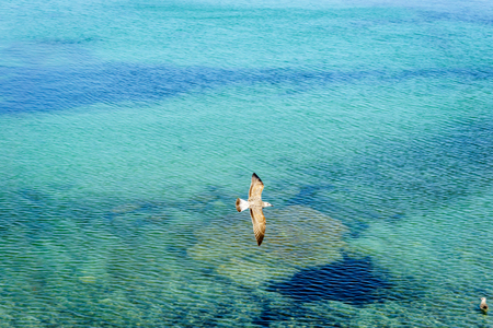 Seagull flying over sea over green blue ocean in Trapani, Sicily