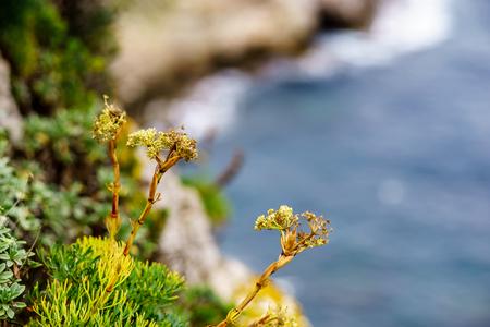 cape Milazzo, nature reserve Piscina di Venere, Sicily, Italy, Tyrrhenian sea, Europe.