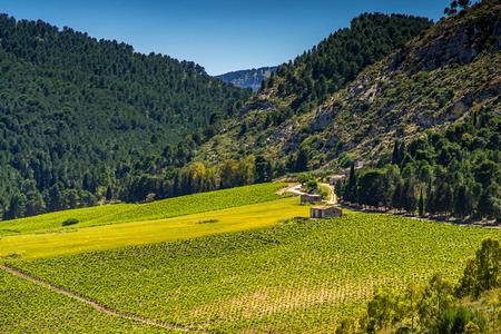 Farmhouses in a vineyard, Sicily