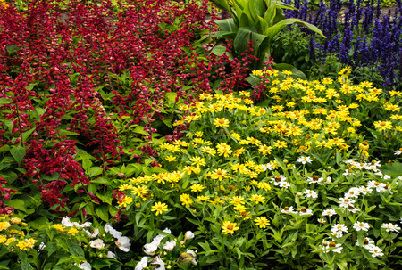 margarite: Flower meadow