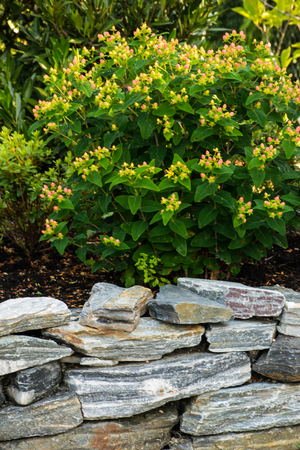 rockery: Rockery with natural stones