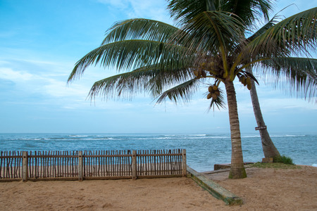 coconut palms, sea and cloudy sky