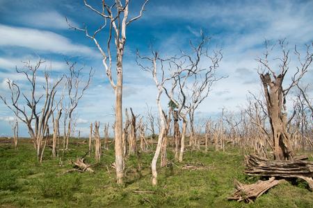 dead trees, cloudy sky Stockfoto