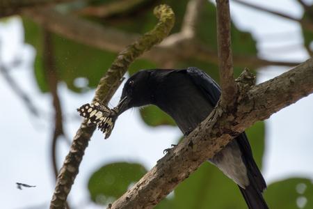 bird eats butterfly