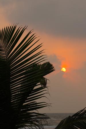 sunrise at the sea and palm tree Stockfoto