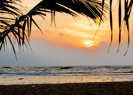 Sunset behind palm trees and beach