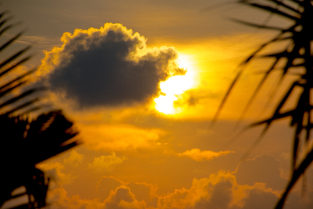 Sunset, palm trees and clouds Stockfoto