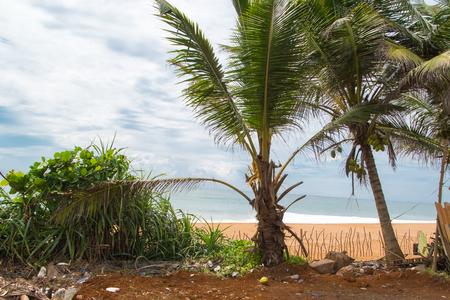Coconut palms, sea and cloud sky