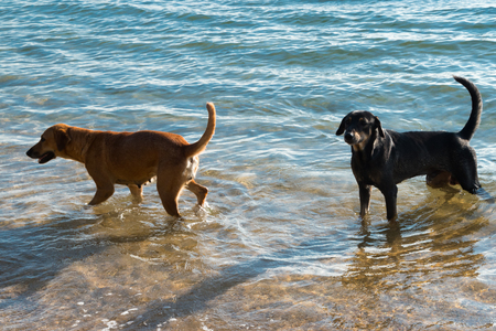 stray dogs on the beach