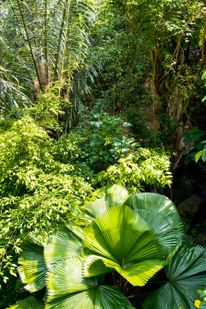 Various plant species in the jungle Stockfoto