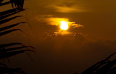 Sun, palm and cloud sky