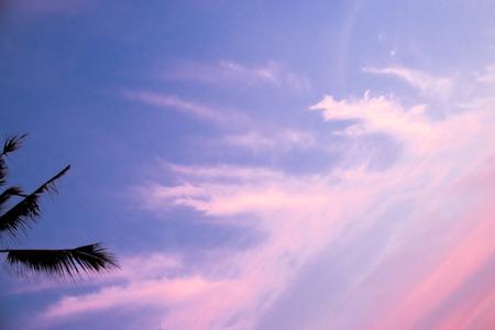 Palm and cloud sky