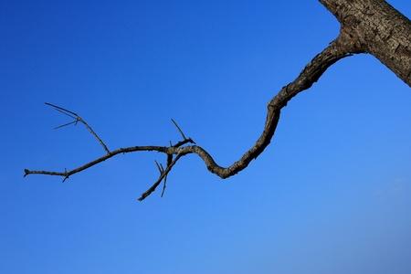 Limb wood on blue sky