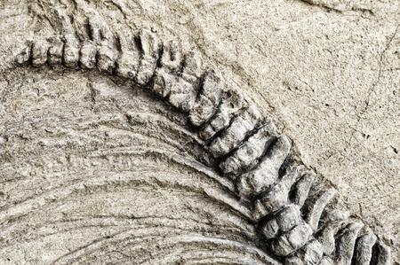 artefact: Dinosaur skeleton Stock Photo