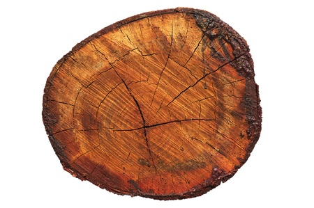 cross process: Wood section
