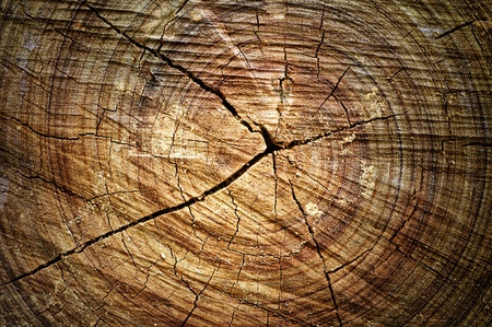 Abstract crack wood  ancient spiral style Stock Photo - 12930432