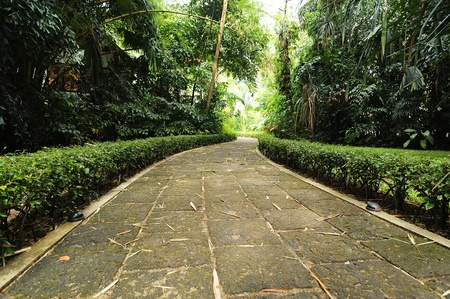 Walkway at garden tropical style photo