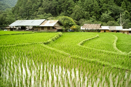 stay beautiful: Rice Field and House in Chiangmai, Thailand Stock Photo