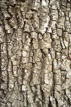 home grown: Bark texture