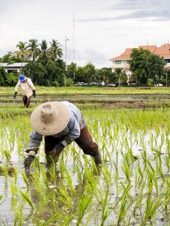 south asians: Thailand farmer