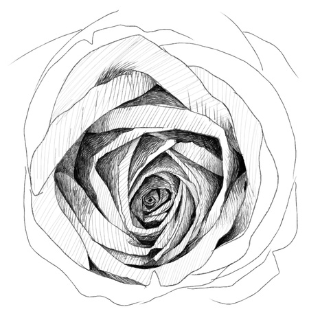 Rose   pencil sketchbook  Vector