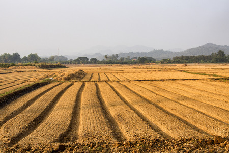 Agricultural fields photo