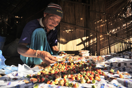 fruit trade: CHIANG MAI THAILAND - DECEMBER 31 : Doi Ang Khang Village, Unidentified elderly men ethnic stuffing the strawberry to be sold to tourists. on December 31 , 2014 in Chiang Mai, Thailand.