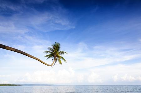 Kokosnuss-Baum am Meer in Thailand
