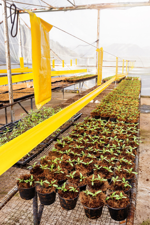 plant nature: Tomato cultivation : Cultured seedlings