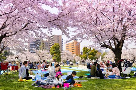 TOKYO JAPAN - 29. MÄRZ 2018: Kinshi Park, nicht identifizierte Touristen besuchen die Kirschblüte. dieses Phänomen nur einmal im Jahr. Es ist sowohl für Japaner als auch für Ausländer attraktiv. Die Hauptaktivitäten sind Familien Editorial