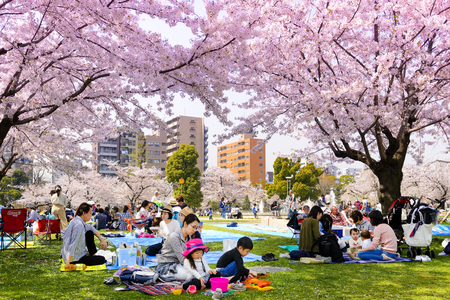 TOKYO JAPAN - MARCH 29, 2018 : Kinshi Park, Unidentified tourists visit the cherry blossom. this phenomenon only once year. It is attractive to both Japanese and foreigners, main activities are family 에디토리얼