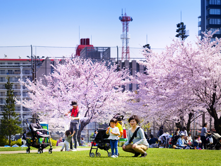 TOKYO JAPAN - MARCH 29, 2018 : Kinshi Park, Unidentified Japanese mother taking her children picnic under the tree Sakura. this activity was very popular during the early cherry blossoms.