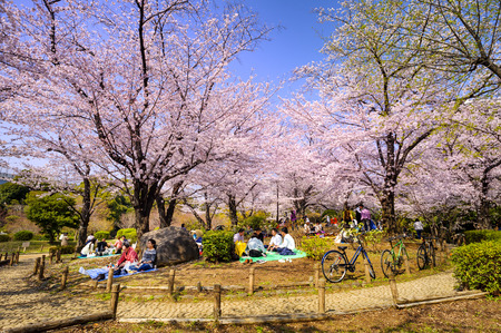 TOKYO JAPAN - MARCH 28, 2018 : Sumida park, Unidentified tourists visit the cherry blossom. this phenomenon only once year. It is attractive to both Japanese and foreigners, main activities are family