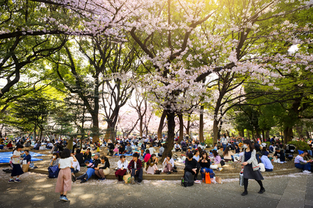 TOKYO JAPAN - MARCH 29, 2018 : Ueno Park, Unidentified tourists visit the cherry blossom. this phenomenon only once year. It is attractive to both Japanese and foreigners, most popular landmarks. 新聞圖片