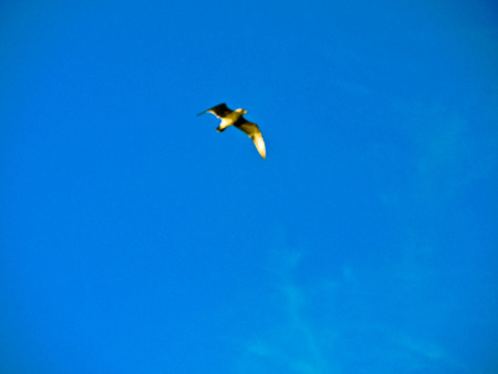 intensely: Intensely blue sky, and your bird