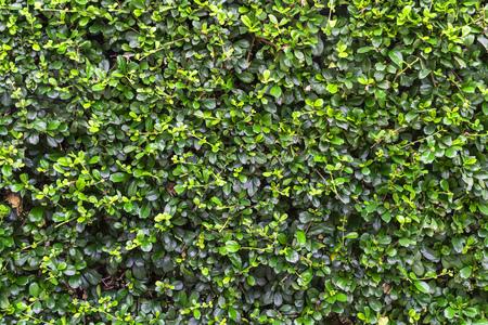 shrubbery: shrubbery in public park