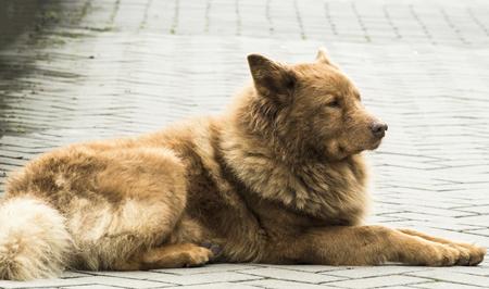 lay down: lay down dog