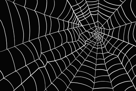 web: Spider web Stock Photo