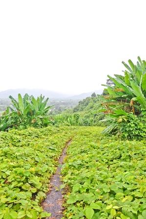 cuve: a small way with green plants at khundan prakanchon dam,thailand
