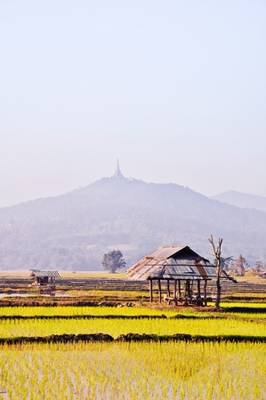 the old hut in a rice farm with a mountain background Stock Photo - 13523400