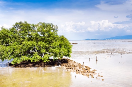 a big tree in sea with sky background Stock Photo - 13717844