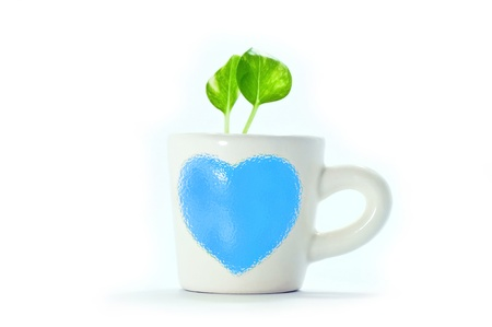 a small Golden pothos  in cup of heart with white background save a green world Stock Photo - 13825787