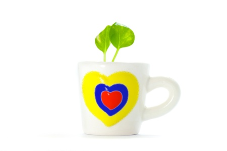 a small plants  in cup of heart with white background , Save a green earth  Stock Photo - 13839455