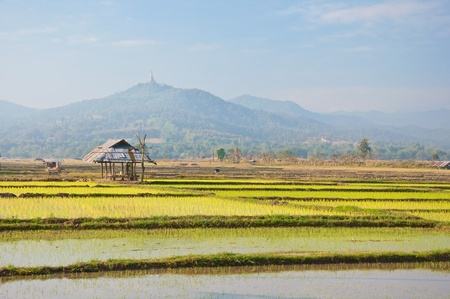old hut in a rice farm with mountain background ,north of Thailand photo