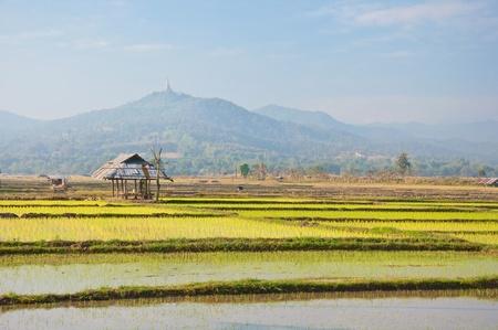 Vieille cabane dans une ferme du riz avec un fond de montagne, au nord de la Thaïlande Banque d'images - 14165656
