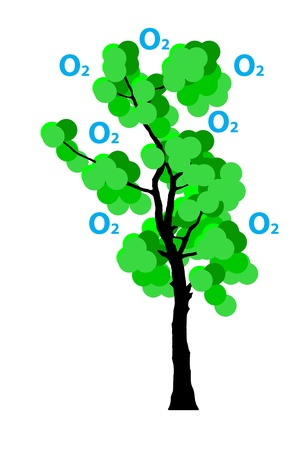 oxigen: illustration of  oxigen production  from  tree