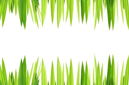 green grasses on white background Stock Photo - 14165675