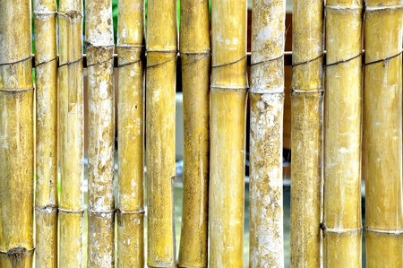 a simply wall made from bamboos  photo